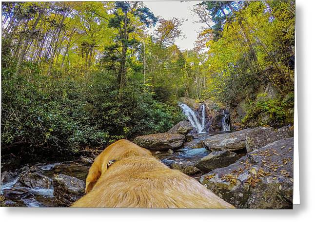 Greeting Card featuring the photograph Canin Creek Falls by Matthew Irvin