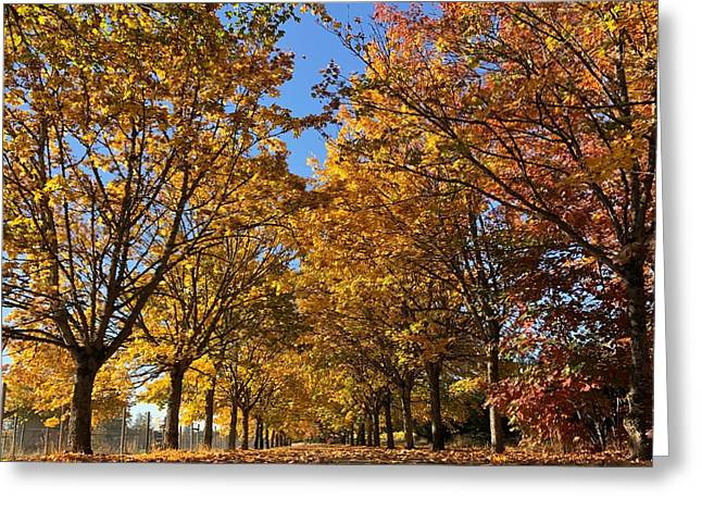 Canopy Of Color Greeting Card