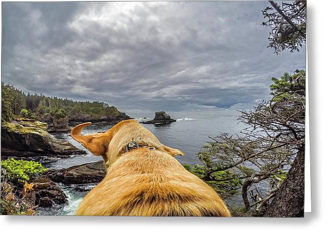 Greeting Card featuring the photograph Cape Flattery By Photo Dog Jackson by Matthew Irvin