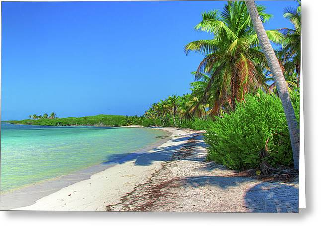 Caribbean Palm Beach Greeting Card