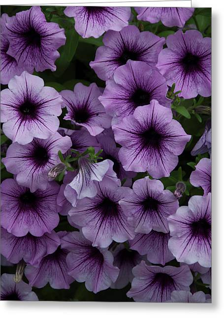 Cascade In Violet Greeting Card