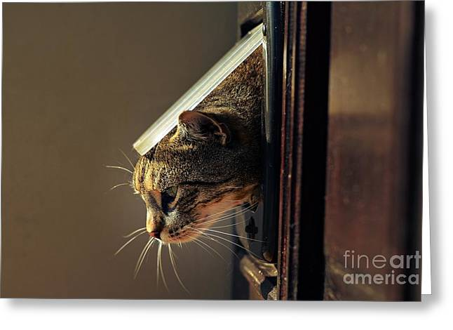 Cat Crawls Out Of The House Through A Greeting Card