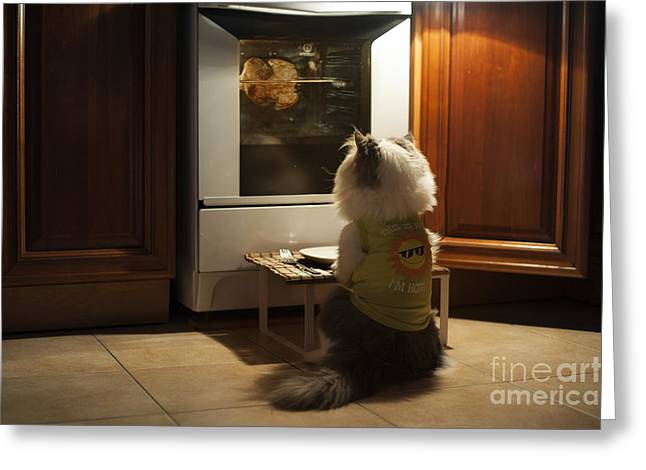 Cat Expects Cooking Chicken Greeting Card