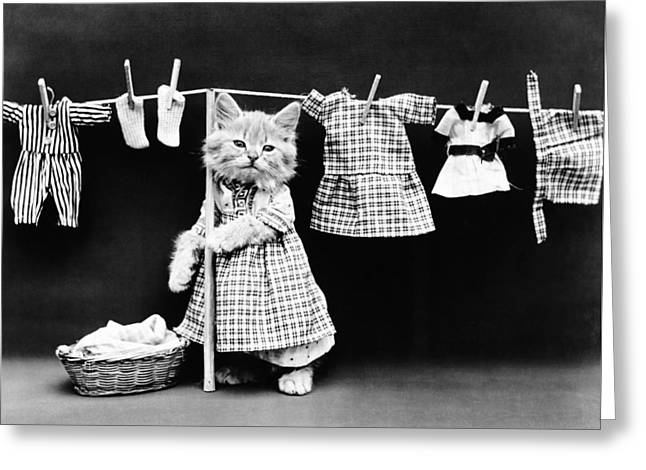 Cat Hanging Laundry On Clothesline - Harry Whittier Frees Greeting Card