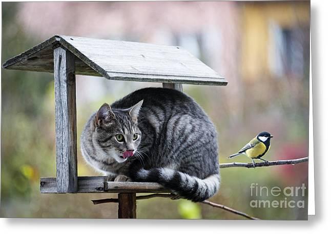 Cat Hunting A Bird Greeting Card