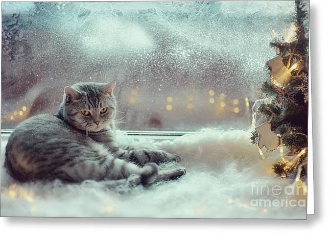 Cat In The Winter Window Greeting Card