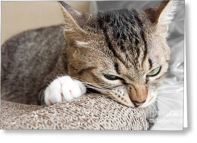Cat Scratching And Biting.claws On The Greeting Card