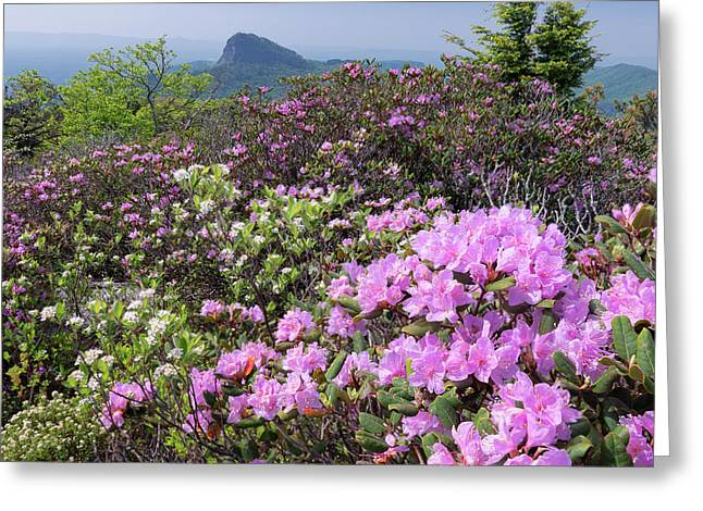 Catawba Rhododendron Table Rock  Greeting Card