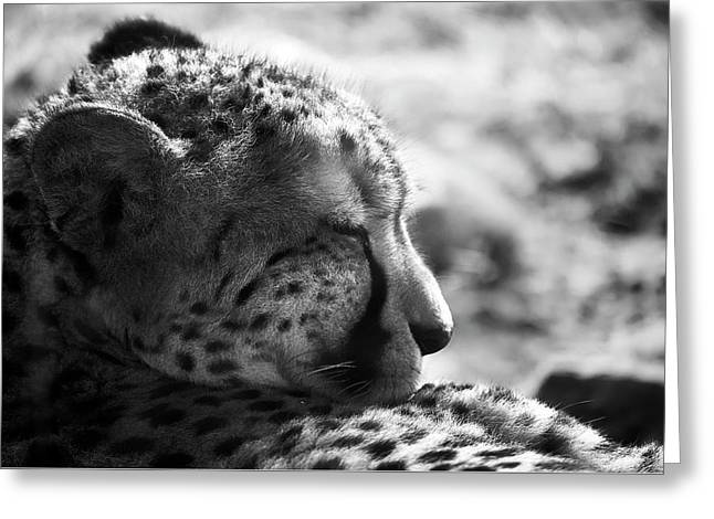 Greeting Card featuring the photograph Catnap by Whitney Goodey