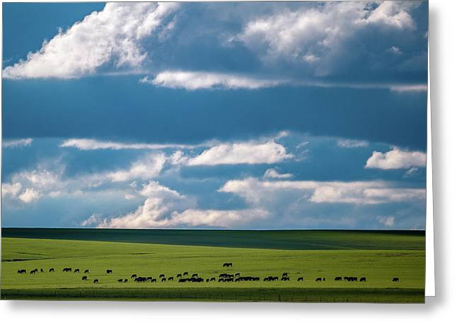 Greeting Card featuring the photograph Cattle On The Flint Hills Prairie by Jeff Phillippi