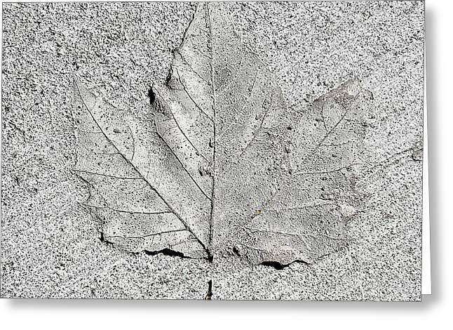 Cement Leaf Greeting Card