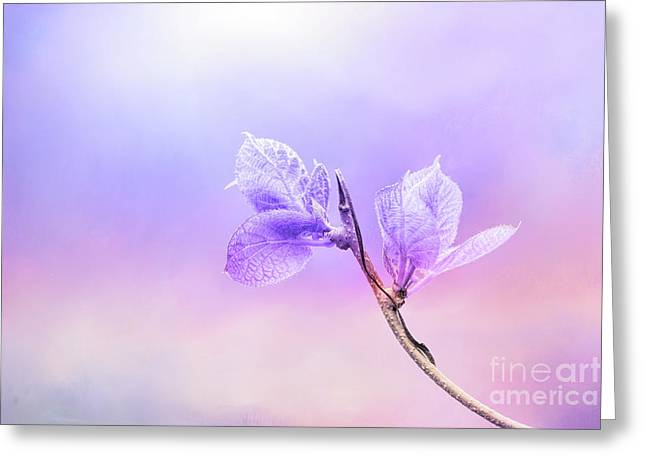 Charming Baby Leaves In Purple Greeting Card