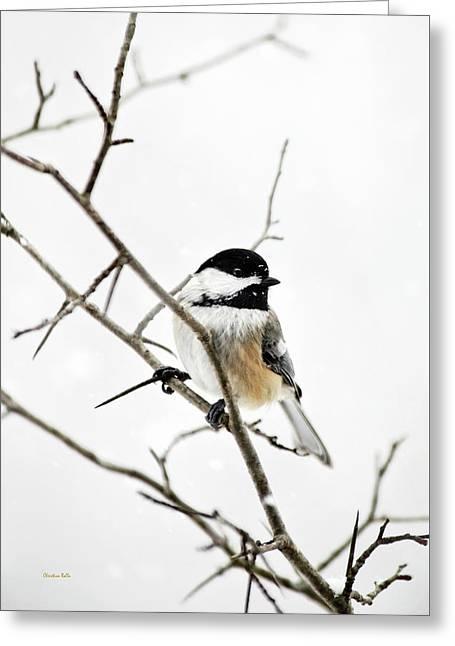 Charming Winter Chickadee Greeting Card