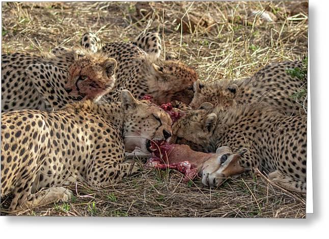 Cheetahs And Grant's Gazelle Greeting Card