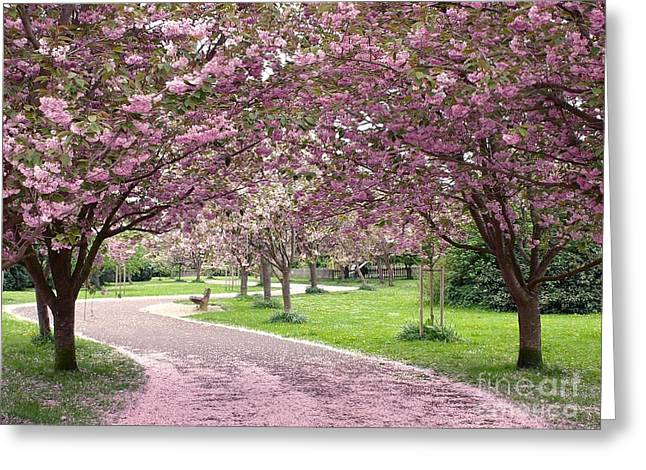 Cherry Blossom In Spring Greeting Card