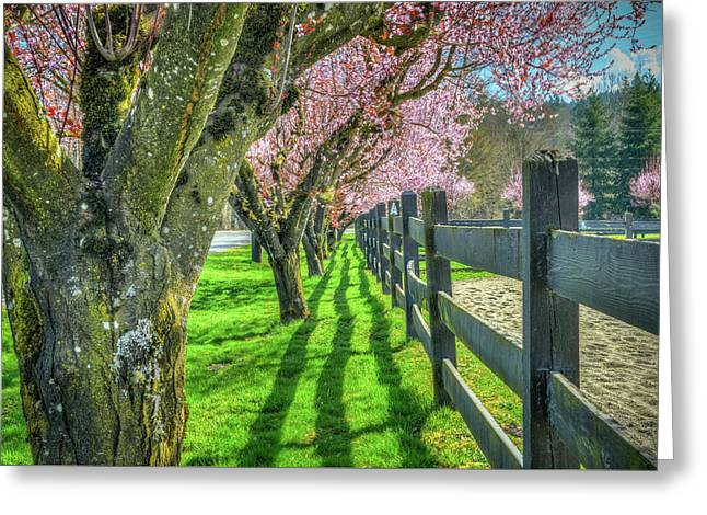 Cherry Blossoms At Cascade Meadows Greeting Card