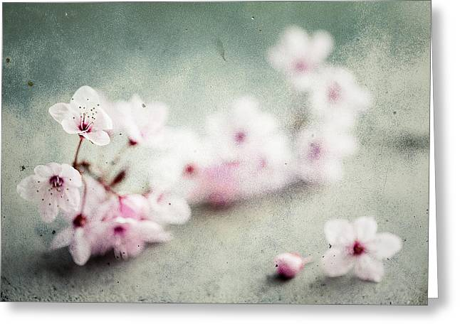 Greeting Card featuring the photograph Cherry Blossoms by Nicole Young