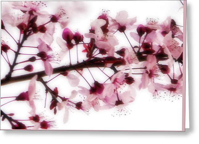 Cherry Triptych Center Panel Greeting Card