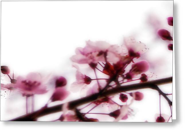 Cherry Triptych Left Panel Greeting Card