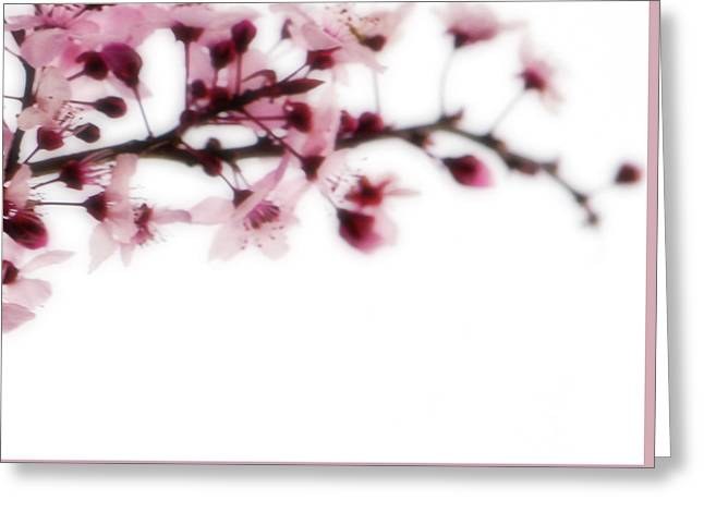 Cherry Triptych Right Panel Greeting Card