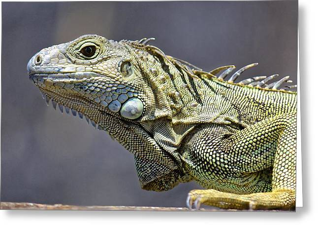 Chicken Of The Trees - Iguana Greeting Card
