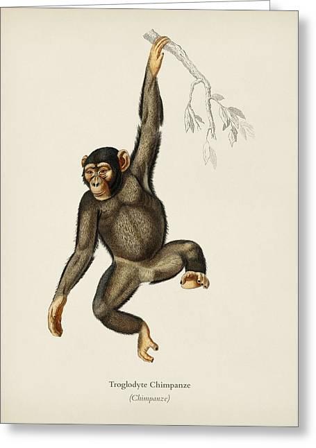Chimpangze  Troglodyte Chimpanze Illustrated By Charles Dessalines D' Orbigny  1806-1876  Greeting Card