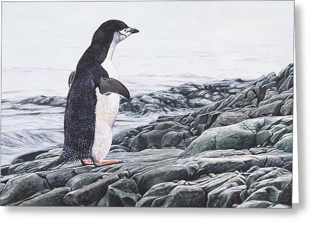 Greeting Card featuring the painting Chinstrap Penguin On A Rock By Alan M Hunt by Alan M Hunt