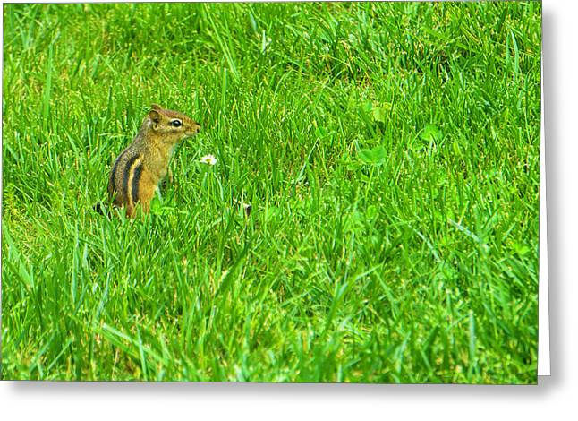 Chipmunk And The Flower Greeting Card