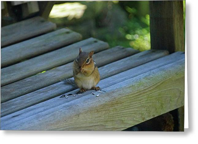 Greeting Card featuring the photograph Chipmunk Eating Seeds by Angela Murdock