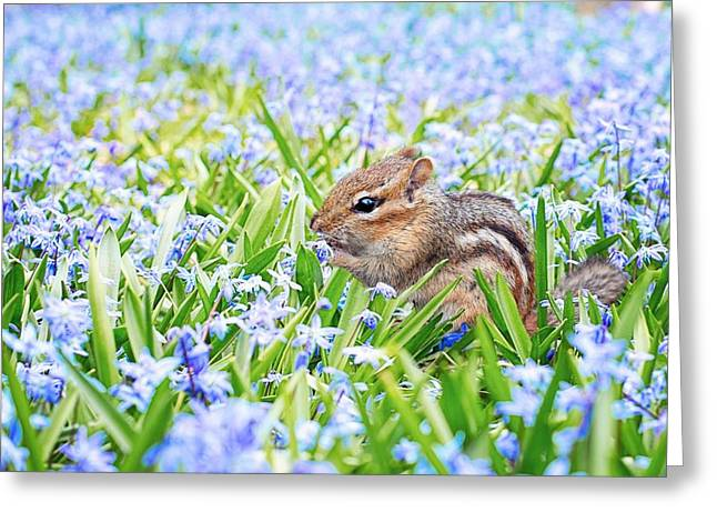 Chipmunk On Flowers Greeting Card