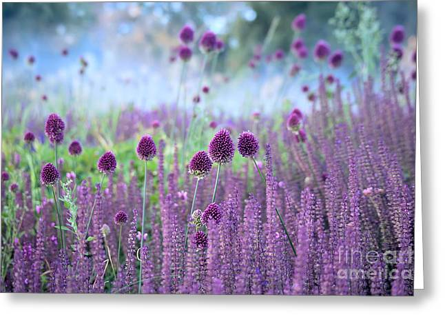 Chive Herb Flowers - Allium Greeting Card