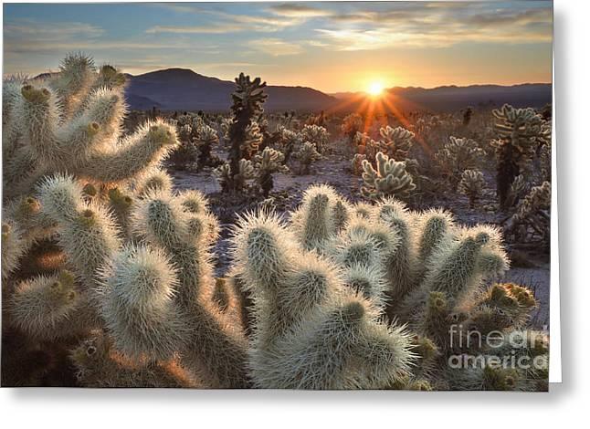 Chollas Cactus Sunrise Joshua Tree Greeting Card by Sierralara