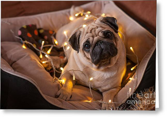 Christmas Dog With Garland In Bed On Greeting Card