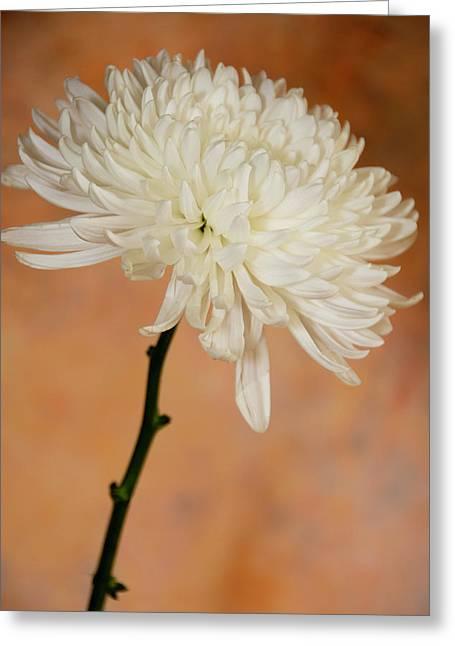 Chrysanthemum On Canvas Greeting Card