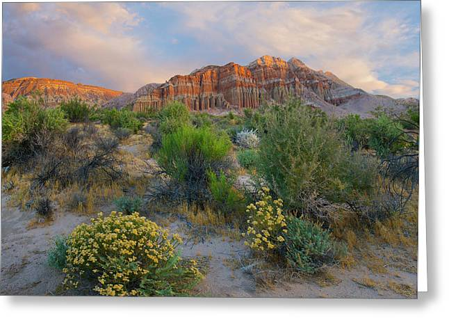 Cliffs In Flowering Desert, Red Rock Greeting Card