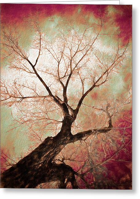 Greeting Card featuring the photograph Climbing Red Fiery by James BO Insogna