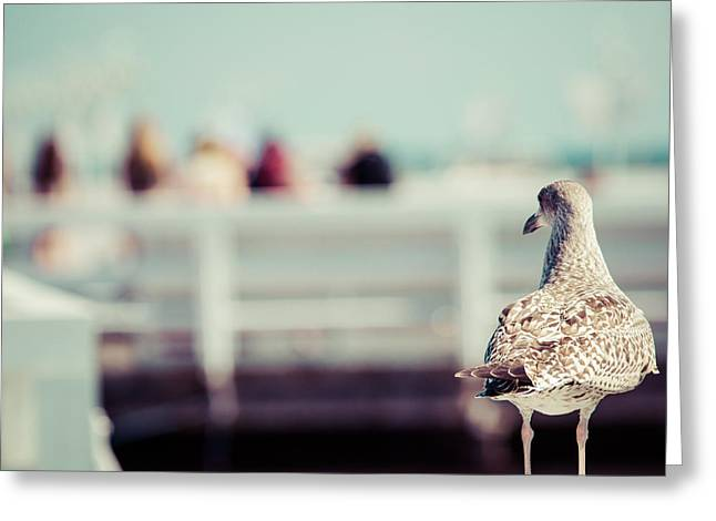 Close-up Of A Seagull In Sopot Pier Greeting Card