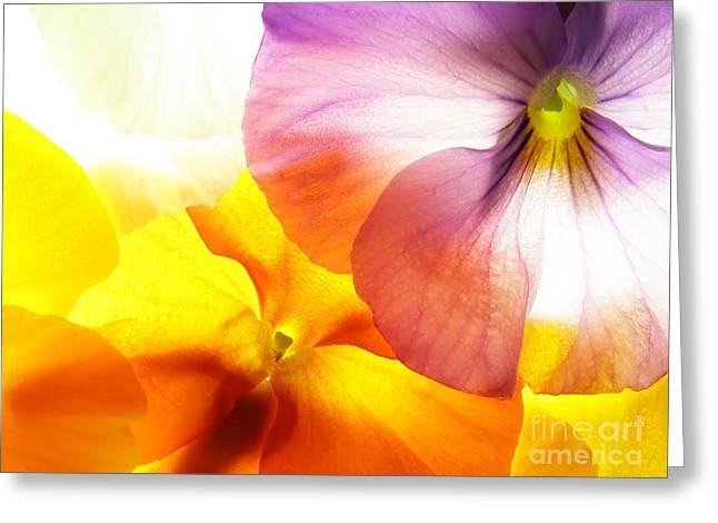 Close-up Of Colourful Viola Tricolor Greeting Card