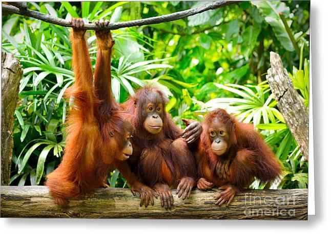 Close Up Of Orangutans, Selective Focus Greeting Card by Tristan Tan