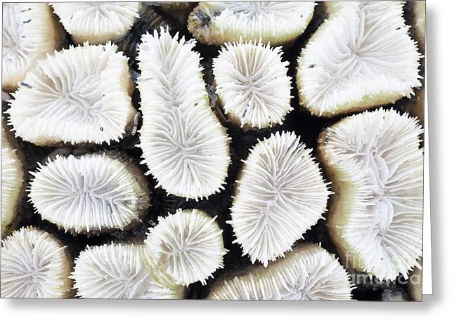 Close-up Of White Coral Greeting Card