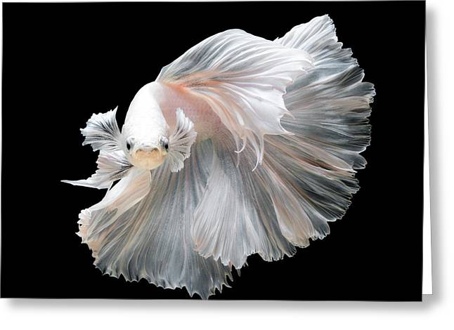 Close Up Of White Platinum Betta Fish Greeting Card by Nuamfolio