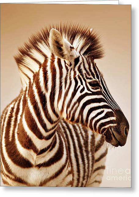 Close-up Portrait Of A  Baby Zebra Greeting Card