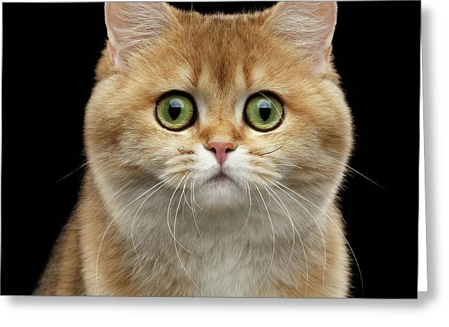 Close-up Portrait Of Golden British Cat With Green Eyes Greeting Card