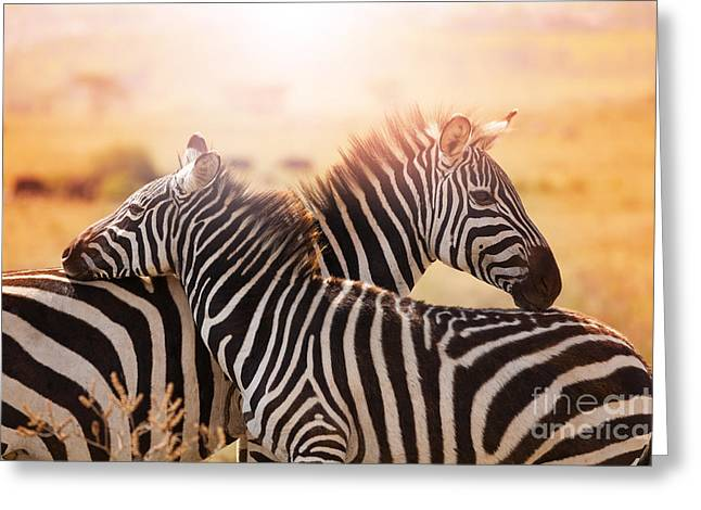 Close-up Portrait Of Mother Zebra With Greeting Card