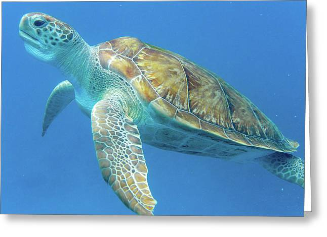 Close Up Sea Turtle Greeting Card