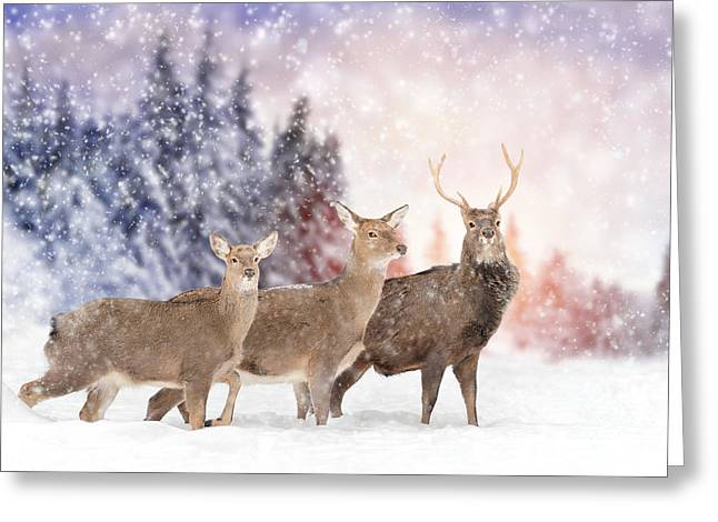Close Young Deer In Nature. Winter Time Greeting Card