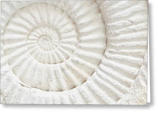 Closeup Of An Ammonite Prehistoric Greeting Card