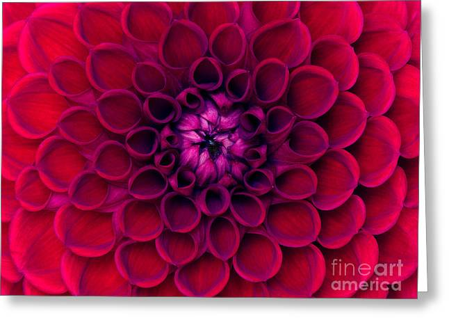 Closeup Of Colourful Flower Greeting Card