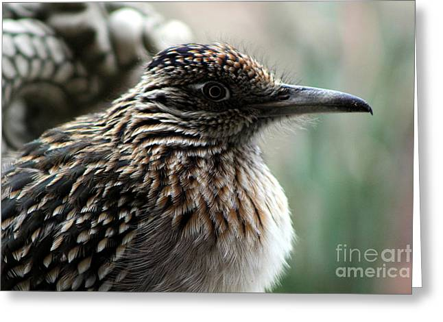 Closeup Of Road Runner By Dragon In Palm Desert Greeting Card