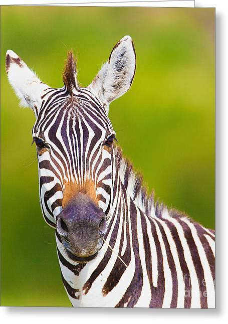 Closeup On Beautiful Zebras Head Greeting Card